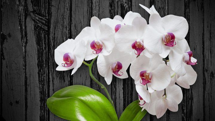 Magnolia Park wręczy pół tysiąca kwiatów przed Dniem Kobiet